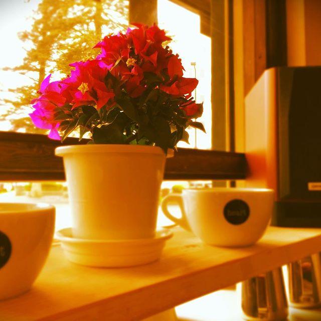 おはようございますあいにくのお天気ですが、お足もとお気をつけてお越しください♪#elskaheartcoffee #pourover #specialitycoffee #rainyday #aeropress - from Instagram